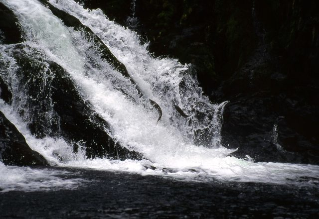 コディアックヒグマの画像 p1_29