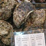 牡蠣の旬はいつだ?シーズンの異なる2種類の牡蠣を美味しく!