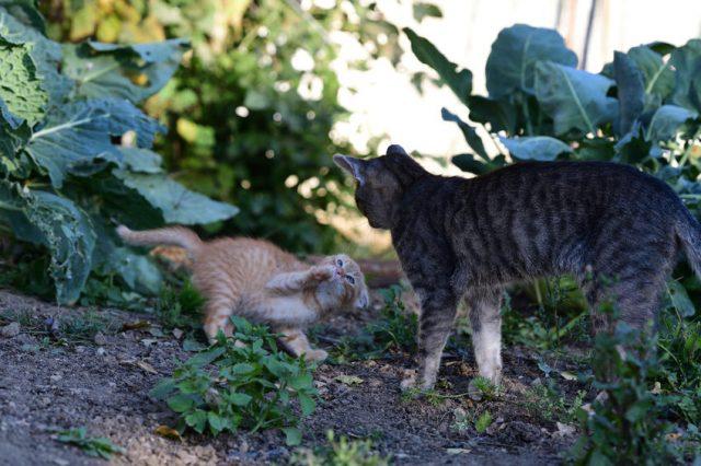 仲良く遊んでいる猫たち