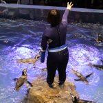動物園や水族館の飼育員になるには!トレーナーや資格など