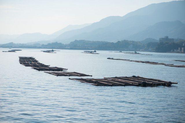 広島県宮島の牡蠣養殖場