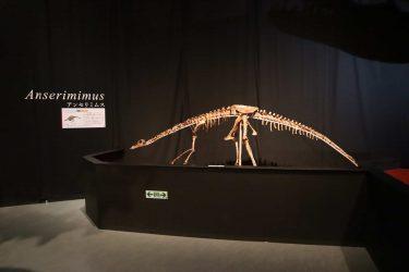 「ティラノサウルス」など恐竜の絶滅の原因は?地球史や化石も