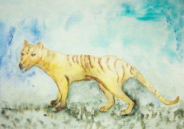 タスマニアタイガー(フクロオオカミ)の生態!絶滅の原因は?