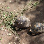 加藤英明は静岡大学の先生!亀やトカゲなど爬虫類を紹介。動物園にいる?