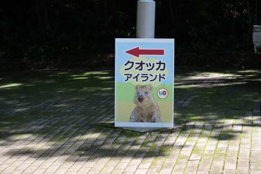 クオッカを探しに埼玉県に行ってみた!出会えたら幸運?!実は絶滅危惧種