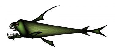 ホウライエソは深海生物!生態などを調査!