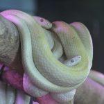 白蛇の由来について。金運もあがる?シロヘビが夢に現れる理由は?