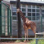 夏休み自由研究のテーマ!動物についての、作文の書き方などを説明。