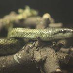 アオダイショウって危険なヘビ!?生態を知ってみると意外と・・・