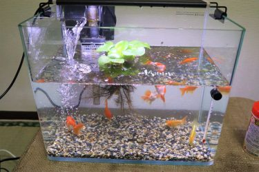 金魚の水槽の立ち上げや飼育に必要なペット用品を準備した!掃除用の網が必要